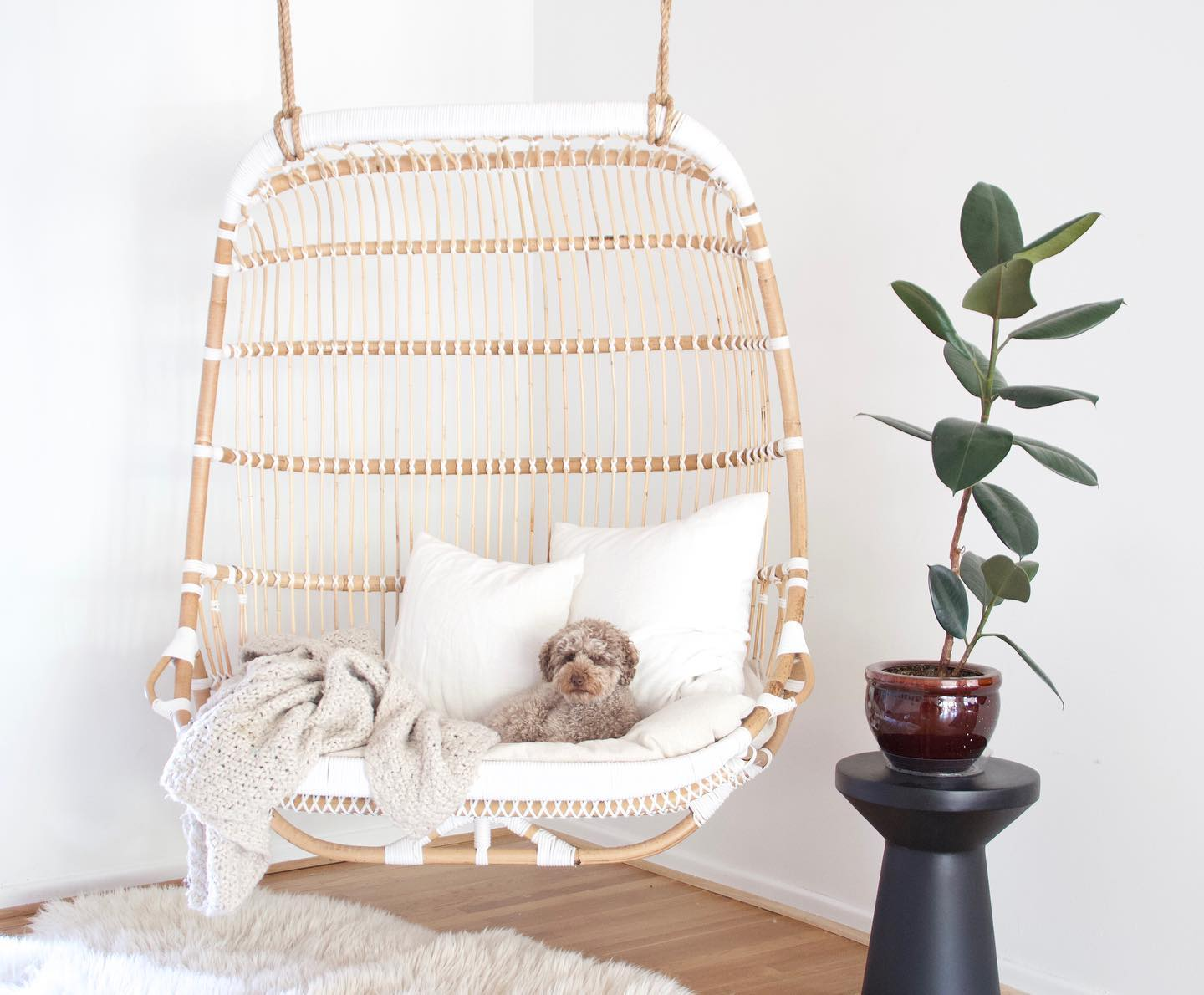 indoor-double-basket-chair-with-thick-cushion-and-adog-sitting-on